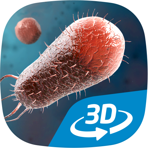 Bacteria interactive educational VR 3D