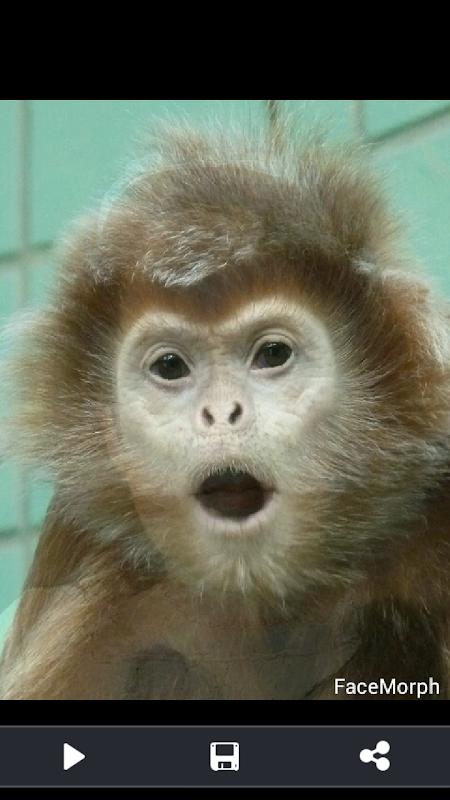 Screenshot Face Morph APK