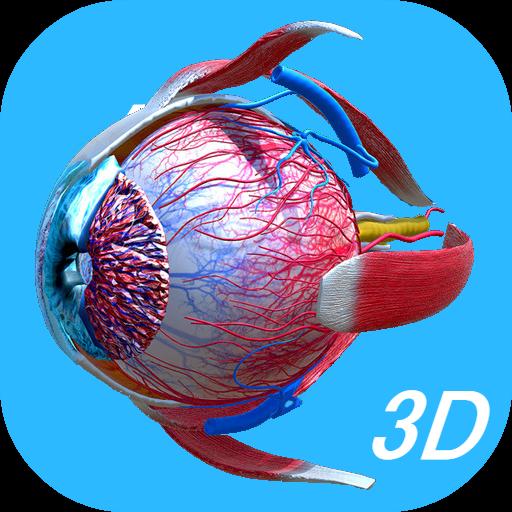 Anatomy Human Eye