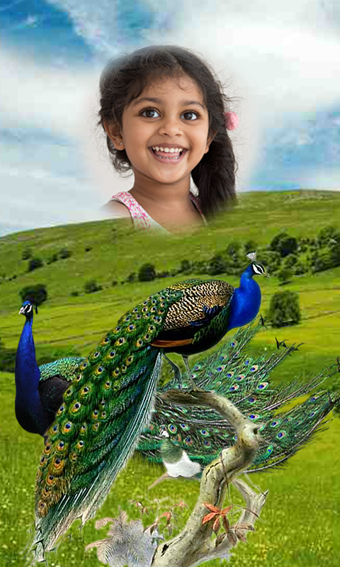 Screenshot Peacock Photo Frames HD APK