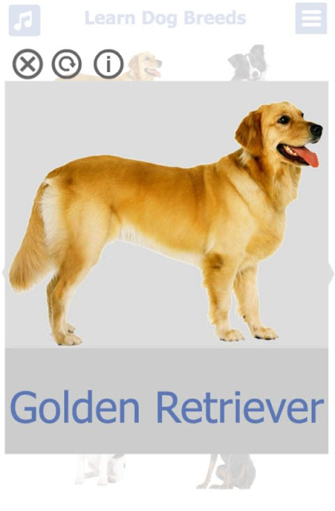 Dog Breeds 🐶 Golden Retriever | Rottweiler