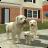 Dog Sim Online: Raise a Family 200